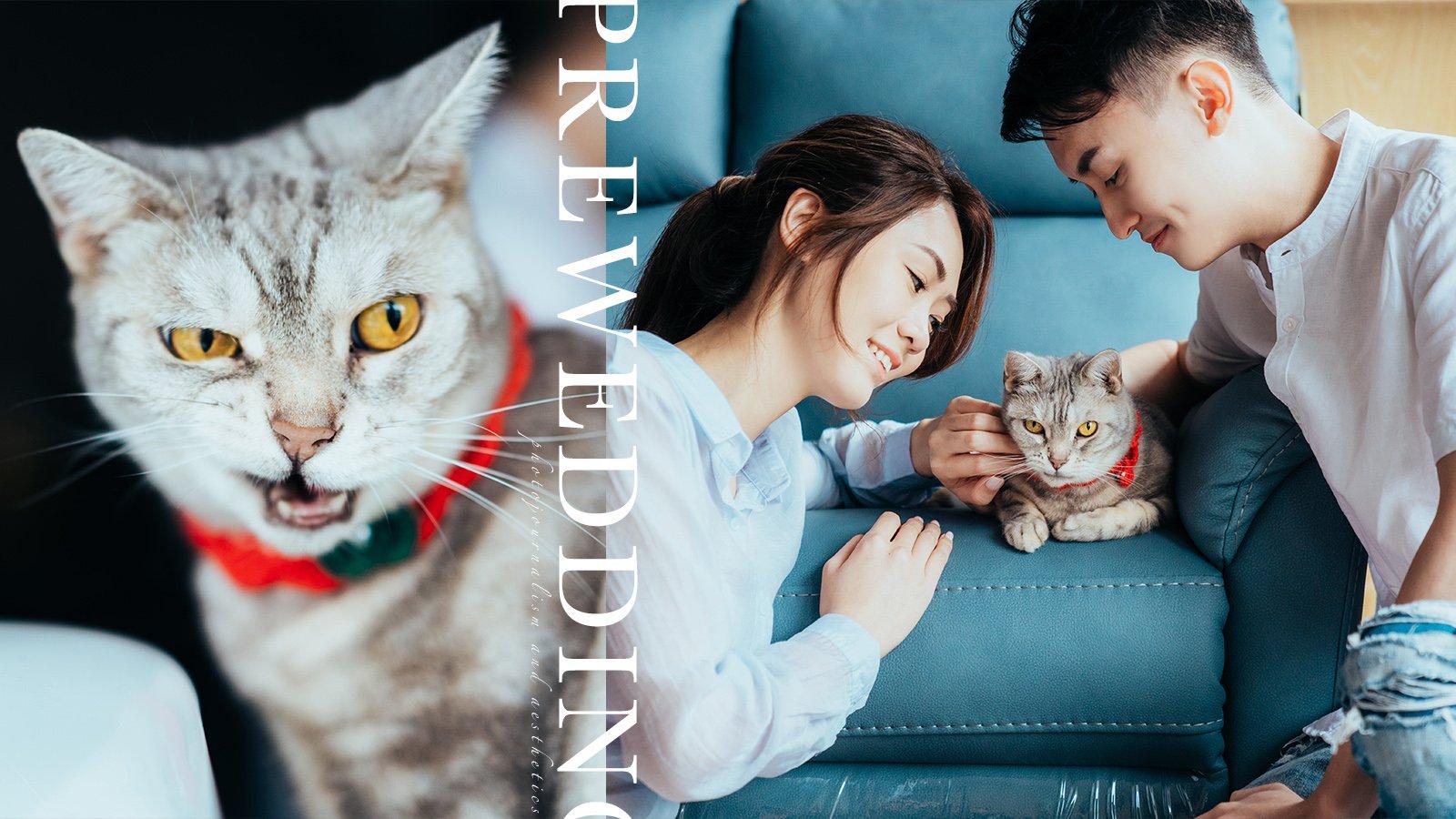 【貓奴的愛情故事】|婚紗相最佳配角就是牠!|Home feel prewedding